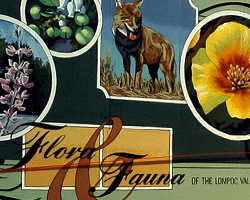 Flora and Fauna of the Lompoc Valley